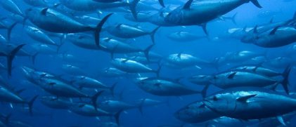 Sharpening climate change predictions for marine fishes