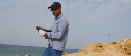 Satellite tracking migratory birds from the united arab emirates