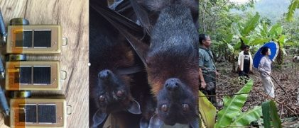 flying-foxes argos tags