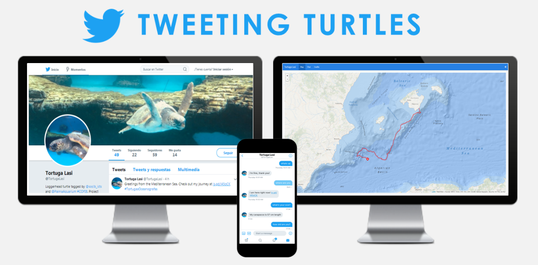Tweeting turtles. Users can follow the turtles on its own twitter account, follow their track in a web map and chat with them to ask about their status. Source: SOCIB.