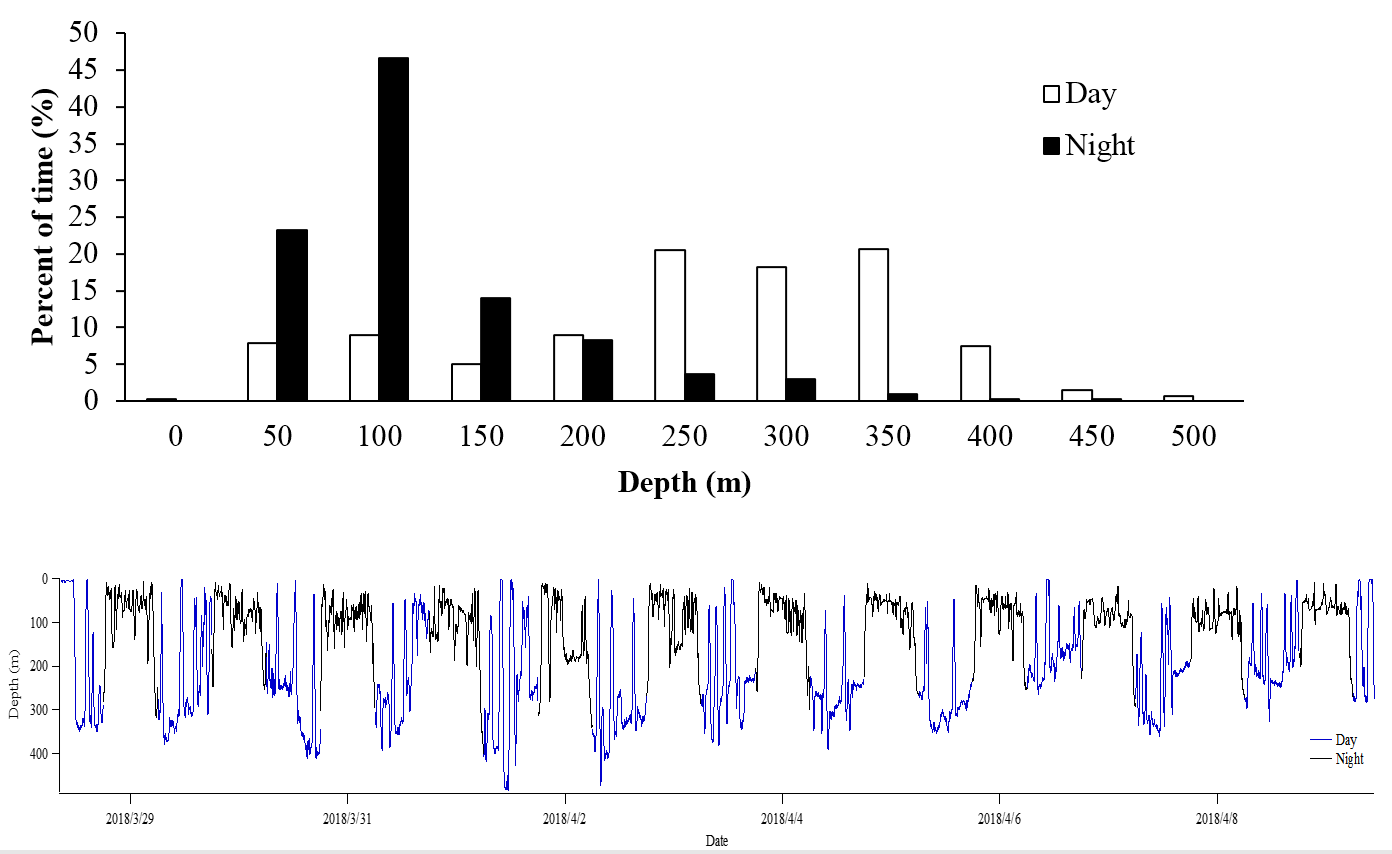 Archived data results: top, percent of time the sunfish stayed at each depth during daytime and nighttime. Bottom, characteristic W-shaped vertical movement patterns during the daytime. Credits Tuna and Billfish Tagging Project in Taiwan