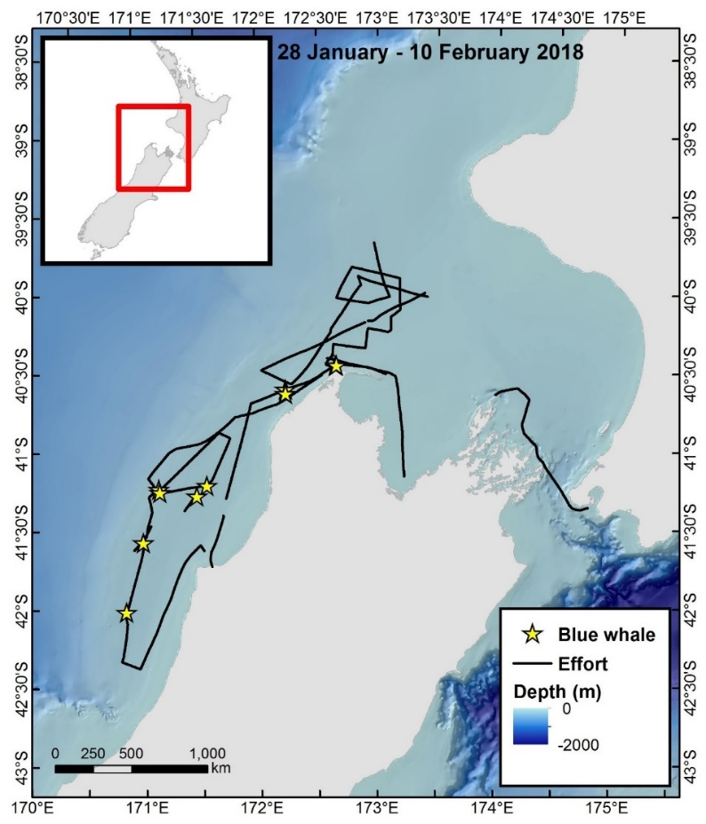 On-effort tracklines and blue whale sighting events collected during the 2018 blue whale voyage. In total during this voyage, 11 blue whale sightings were made consisting of 14 unique individuals. The voyage departed from Wellington, New Zealand on the 28 January and returned to the same port on 10 February 2018.
