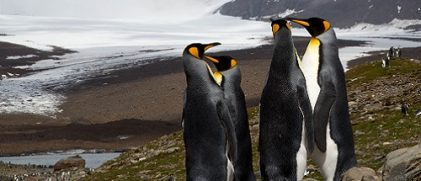 penguins group
