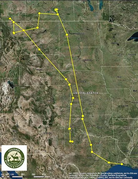 Whooping Crane tracking to Canada and back (Credit Louisiana Department of Wildlife and Fisheries)