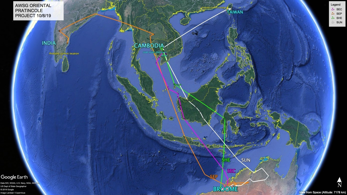 Migration tracks of four satellite-tagged Oriental Pratincoles as of August 10, 2019. At some point they were all in Cambodia or Vietnam, but two diverged afterwards (creditsAustralasian Wader Studies Group)