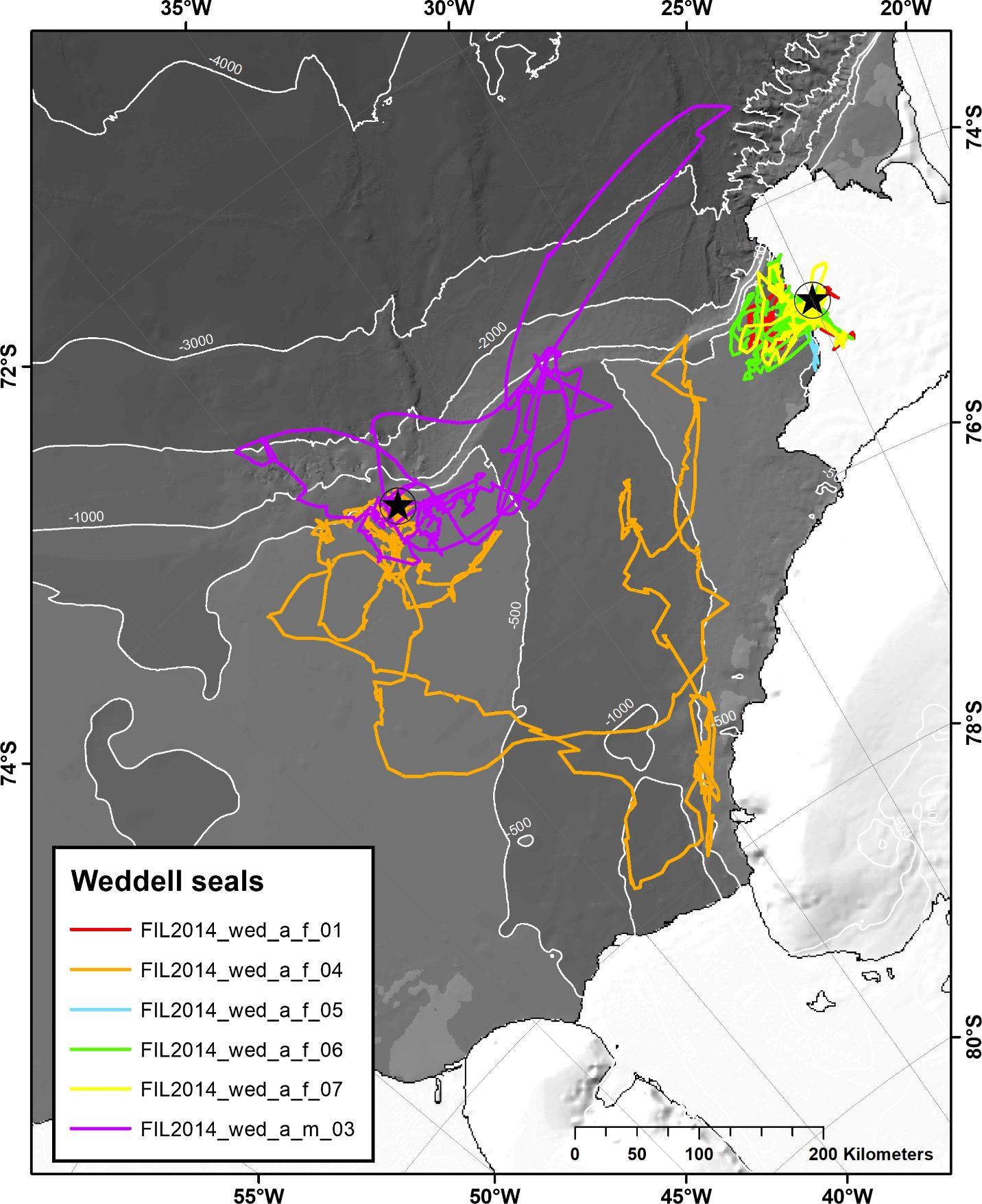 The six Weddell seals' tracks. Seals tagged in the pack ice of the Filchner Outflow System (left star) focussed their foraging activities to the western and, partly, eastern flank of the Filchner Trough. In contrast, Weddell seals tagged on the coastal fast ice (star at the right) exhibited typical central-place foraging and utilized resources close by. (Credit AWI)