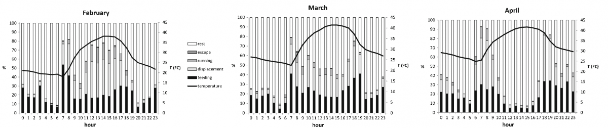 The patterns of activities recorded in February, March and April. The resting or moving activities differ depending on the month (credits Estación Experimental de Zonas Aridas/CSIC)