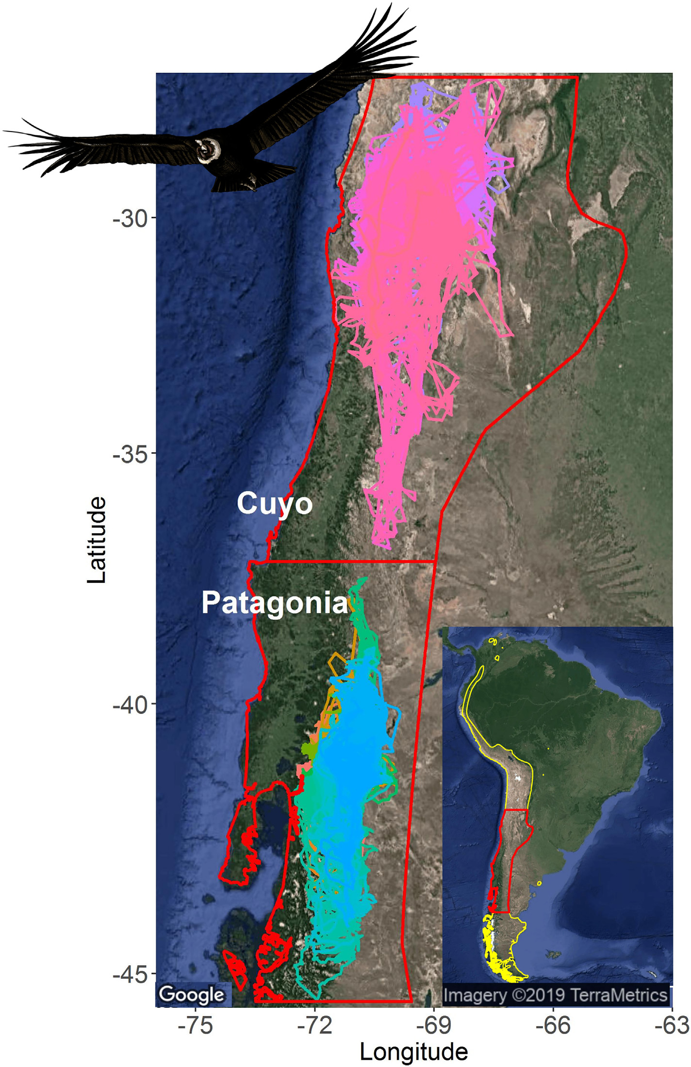 Tracks of the condors within the two study regions, Cuyo in the north and Patagonia in the south. The colors represent different individuals. Yellow contour indicates Andean condor distributional range, and red line the study area. (credit University of Wisconsin-Madison)