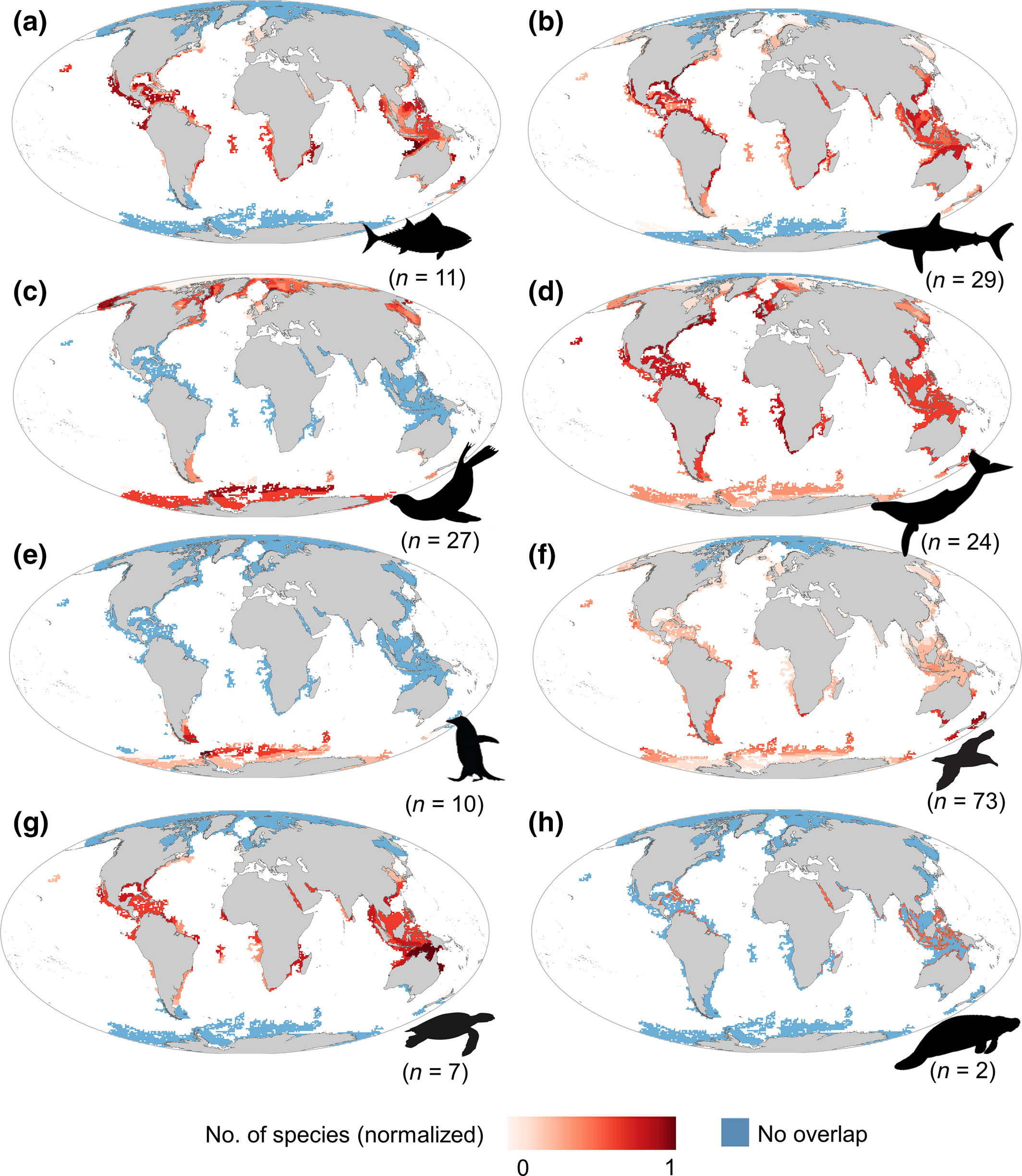 Maps of the spatial overlap between gaps of the Argo network and extent of occurrence, by group of animals. In red, the animal borne instruments complement the best the Argo Array. In blue, there is no complementarity, often simply because the species does not live in the area (source: [March et al. 2019])