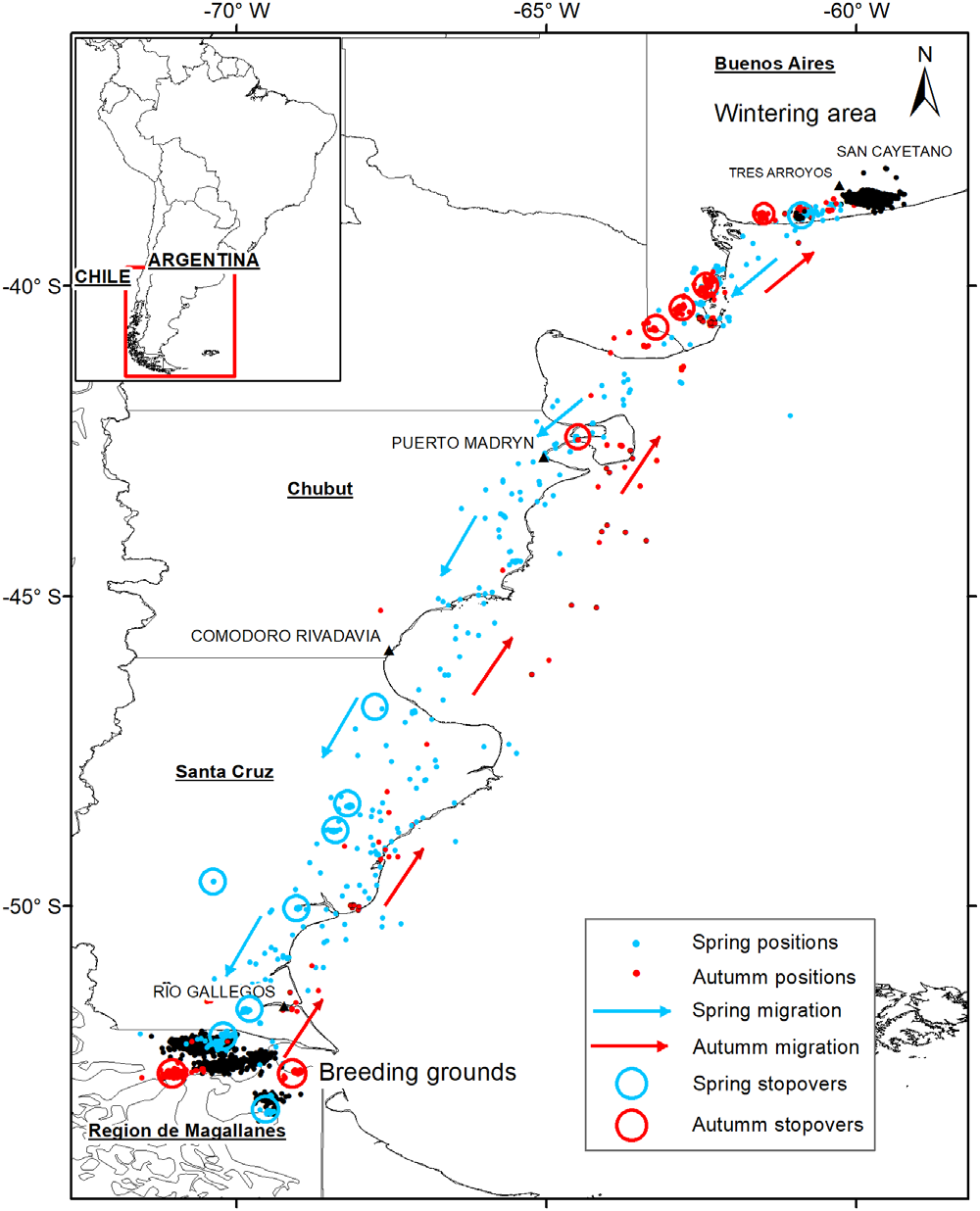 Migration pathways of ruddy-headed geese tracked in 2015–2018. Grey (blue) indicates spring migration and black (red) autumn migration. Circles show stopovers during spring migration and autumn migration. Black points indicate wintering grounds in Buenos Aires province and specified breeding grounds in Patagonia. (From [Pedrana et al., 2020])