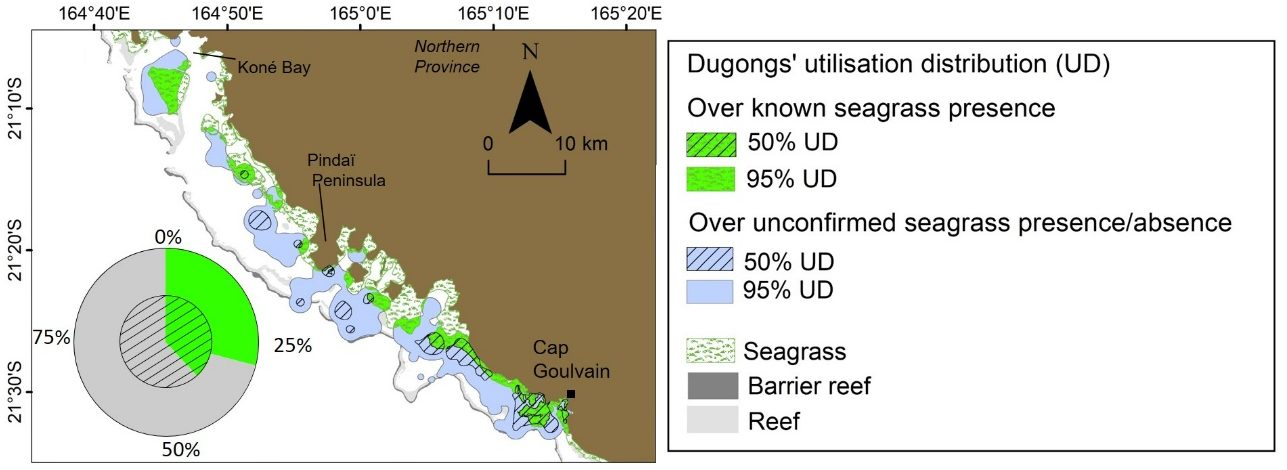 Relationship between the space use of dugongs captured in Cap Goulvain and the known shallow seagrass habitats. Pie chart represents the proportions of 95 % utilisation distribution (outer ring) and 50 % utilisation distribution (inner ring) of dugong areas where the presence of seagrass has been confirmed (in green) or is unconfirmed (in grey). (Credit Christophe Cleguer)