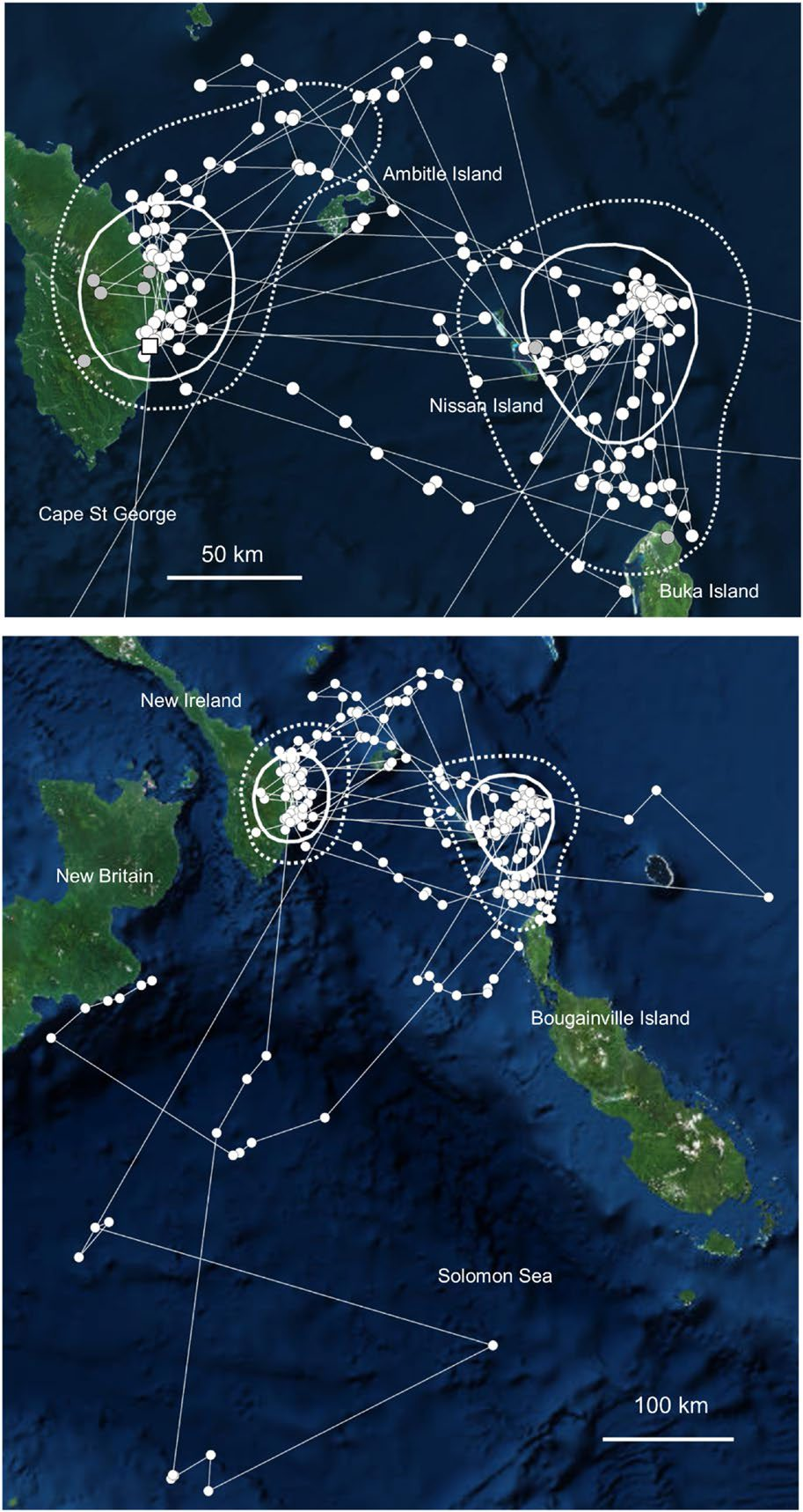 Movements of a tracked Becks Petrel tagged between the 26th April and 26th August 2017, showing core areas (A: 25% kernel, solid line; 50%, hashed line) and all locations during this period (B). Capture location marked by white square. Overland validated locations marked as grey. Map source: ESRI, Digiglobe, GeoEye, Earth Star Geographics, CNES/Airbus DS, USDA, USGS, Aerogrid, IGN, and the GIS user community; reproduced from [Rayner et al., 2020] with permission