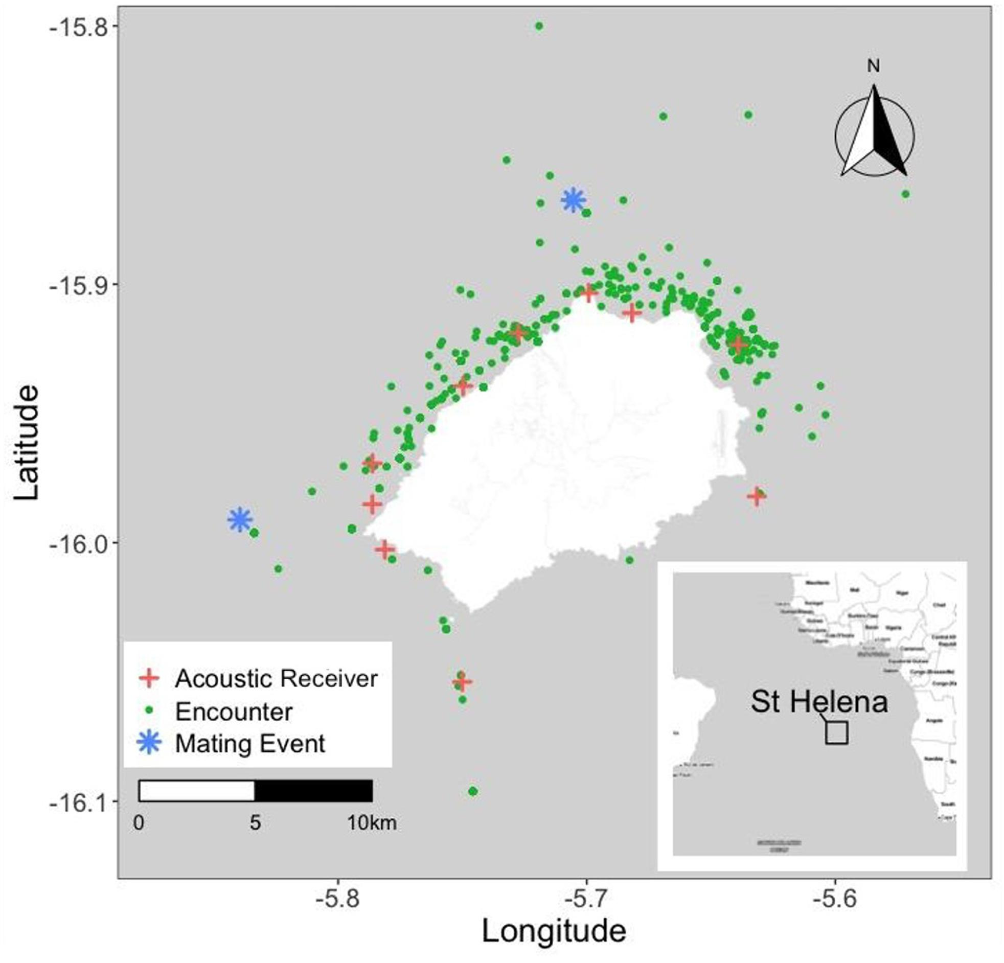 St Helena & whale shark sightings from 1999 to 2019 (green dots), sites of eyewitness accounts of mating behavior (asterisks); receivers in the acoustic array (crosses). Southeast trade winds create a difference in navigability between the calmer leeward side facing the northwest, and the rougher windward side facing southeast.(Credit Georgia Aquarium and Georgia Institute of Technology)