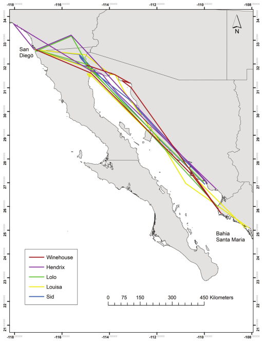 Long-range tracks of the five gull-billed tern (Credit University of Oklahoma, from [Goodenough et al., 2019])