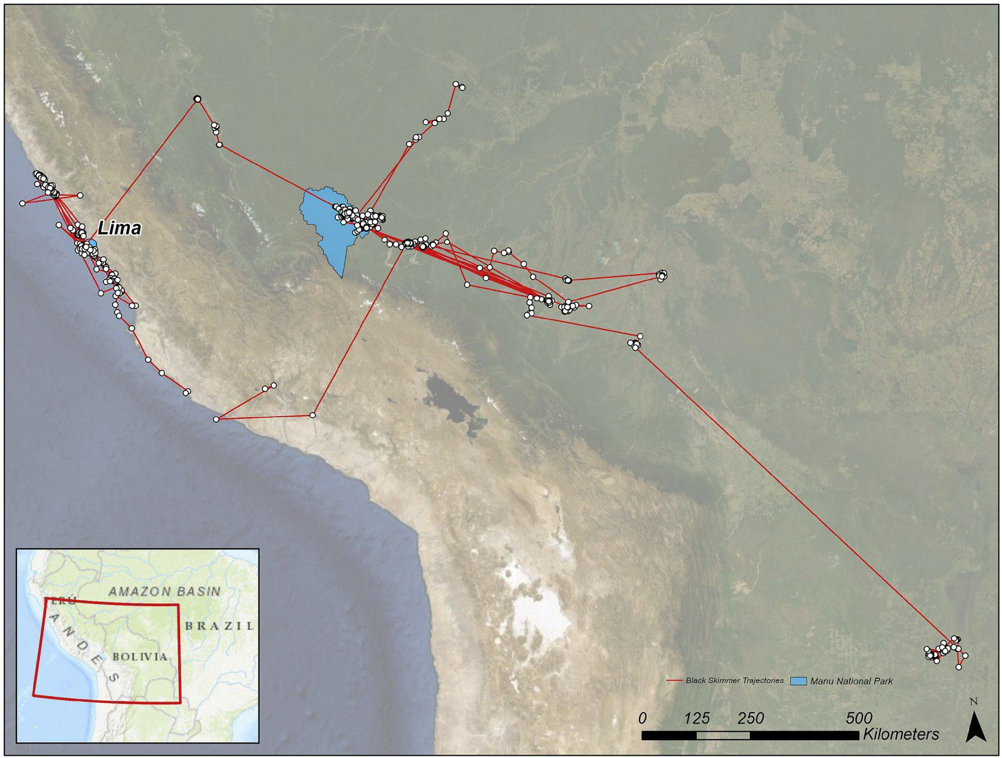 The area of study (in blue Manu National Park) and all the locations from the seven black skimmers tracked (from [Loraamm et al, 2020])