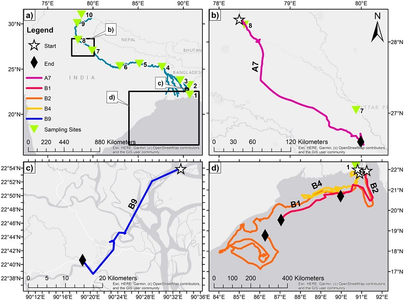 a,the map of the source to sea expedition and the study sites; b&c: example track of bottles deployed in rivers at site 8 and 9. And d, the tracks in the ocean only (bay of Bengal) (from [Duncan et al., 2020])