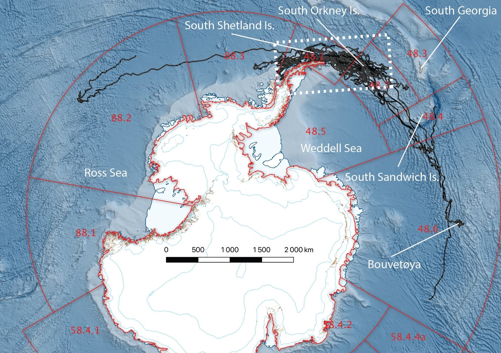 Argos satellite telemetry tracks from the 20 male Antarctic fur seals between 1st January and 8th December 2016 tagged at Powell Island, South Orkney Islands. Two animals ranged as far as the eastern Ross Sea and east of Bouvetøya in the Atlantic, though most remained within the Scotia Sea and western Antarctic Peninsula area. Key krill fishing grounds are shown as the white dashed box; red boxes are CCAMLR Subareas. From [Lowther et al., 2020]
