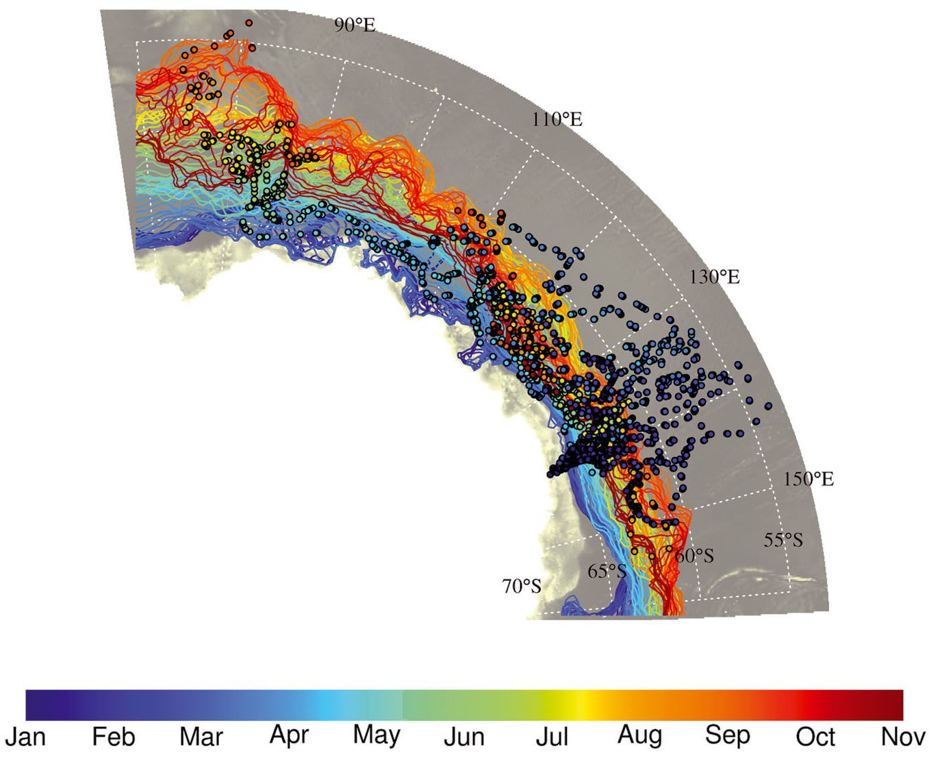 Tracks of the 15 juvenile emperor penguins (dots) and sea ice edge (lines) at different times of the year 2014; the ice edge lines and penguin location dots are colored with respect to time following the same color scale. (Credit CEBC/CNRS, from [Labrousse et al, 2019])