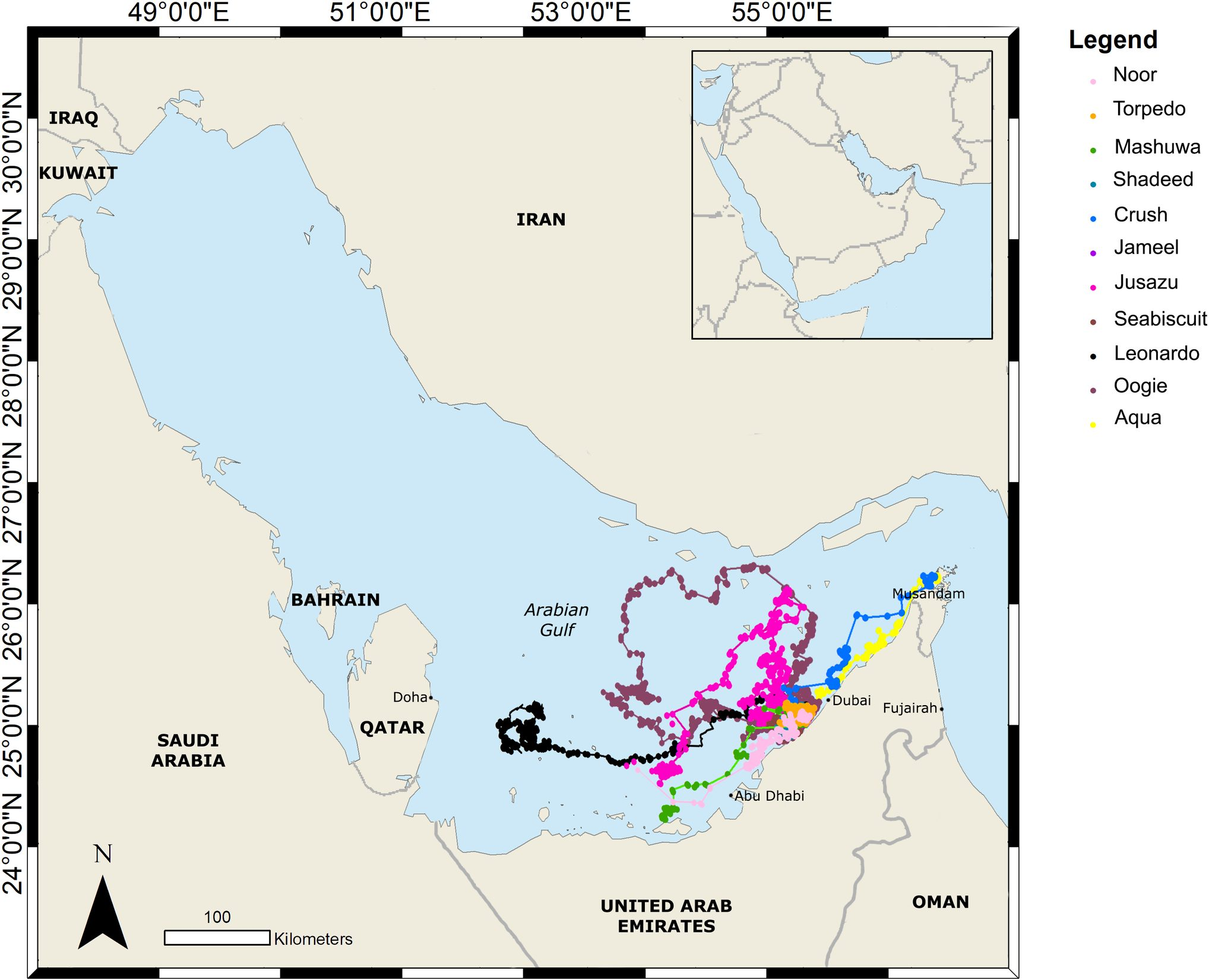 Horizontal movements of eleven rehabilitated hawksbill (left) turtles satellite tagged and released in the United Arab Emirates during this study; the loggerheads move at a larger range than the hawksbill (from [Robinson et al., 2021], credit Dubai Turtle Rehabilitation Project)