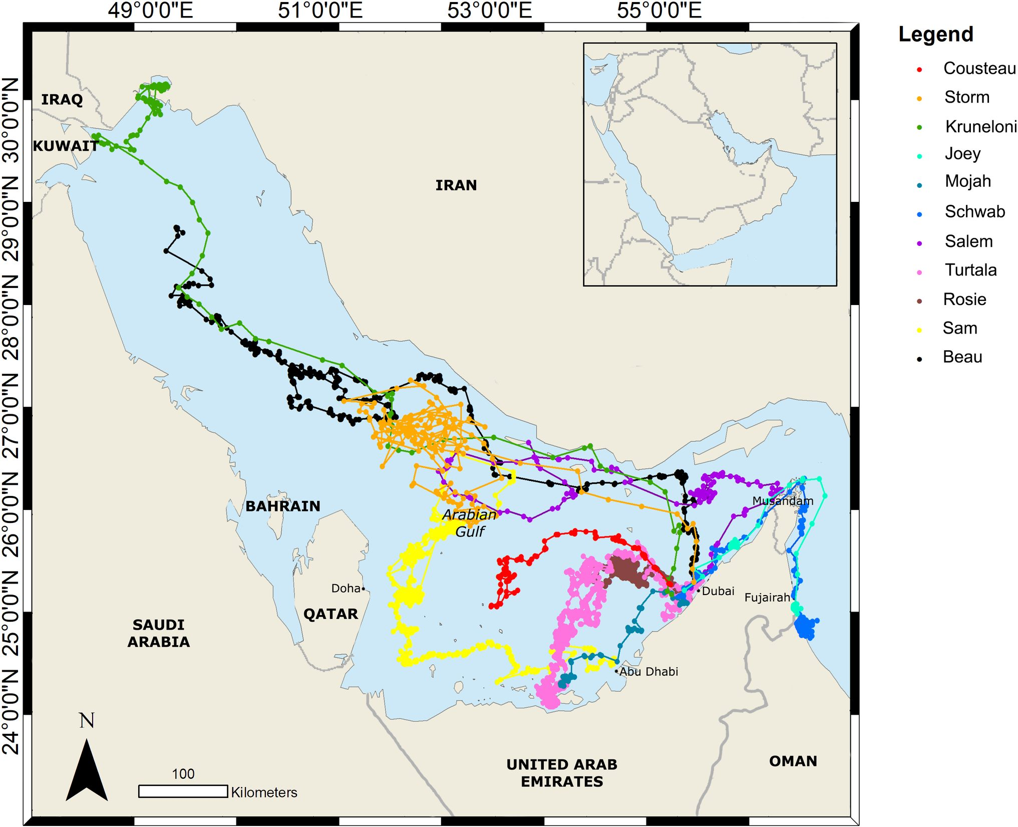 Horizontal movements of eleven rehabilitated loggerhead turtles satellite tagged and released in the United Arab Emirates during this study; the loggerheads move at a larger range than the hawksbill (from [Robinson et al., 2021], credit Dubai Turtle Rehabilitation Project)