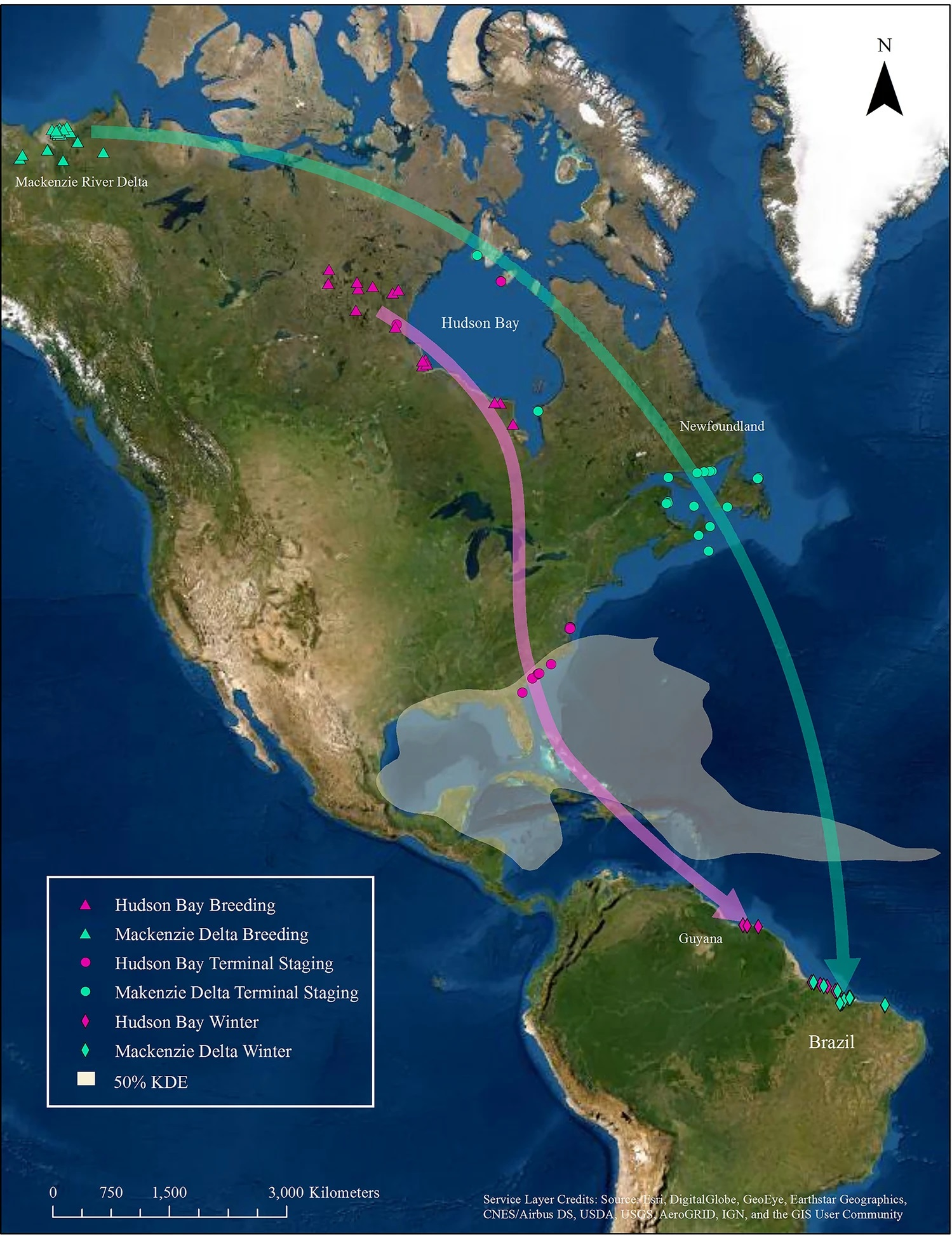 Schematic routes for both whimbrel populations