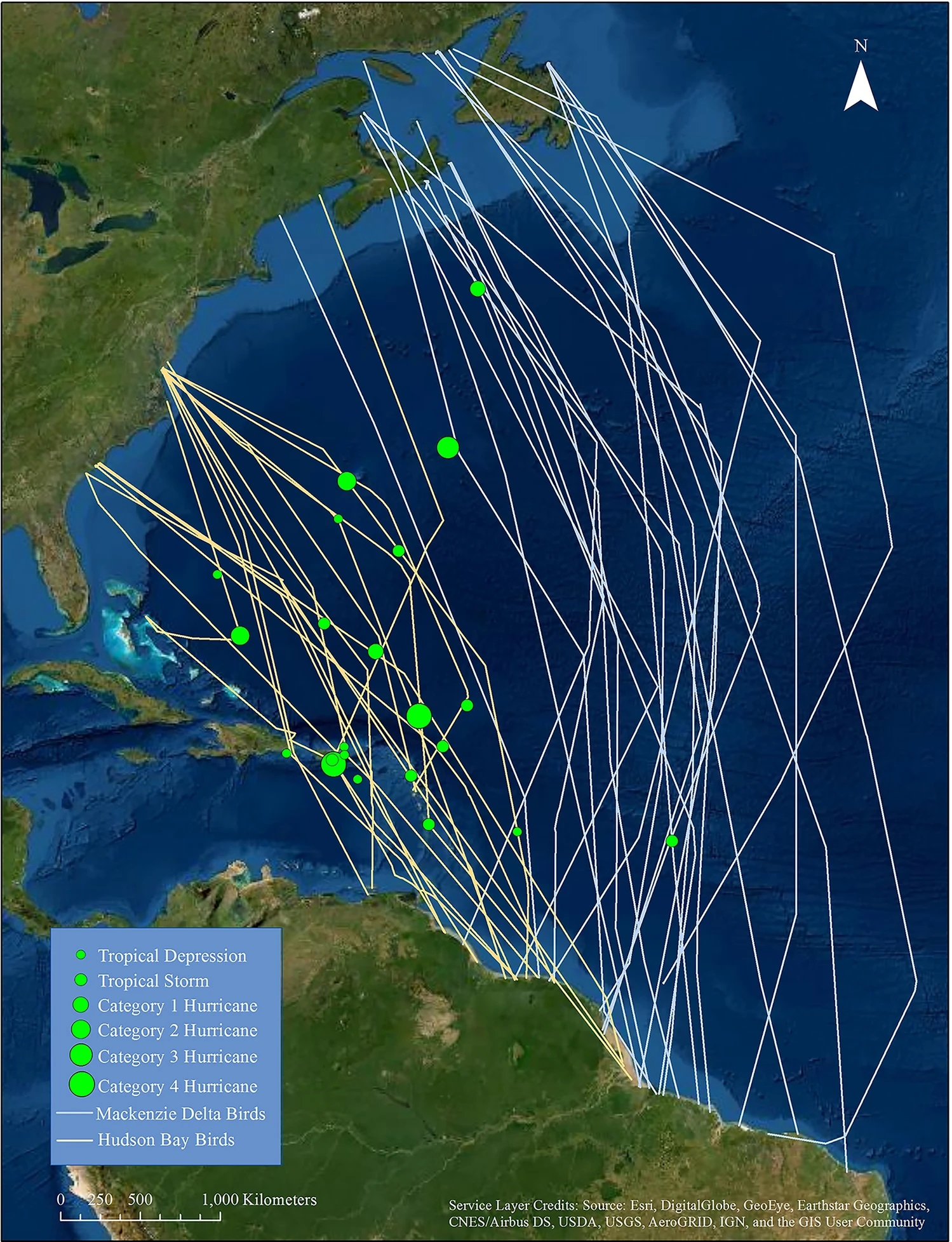 Individual tracks of whimbrels during fall migrations from Mackenzie Delta and Hudson Bay populations