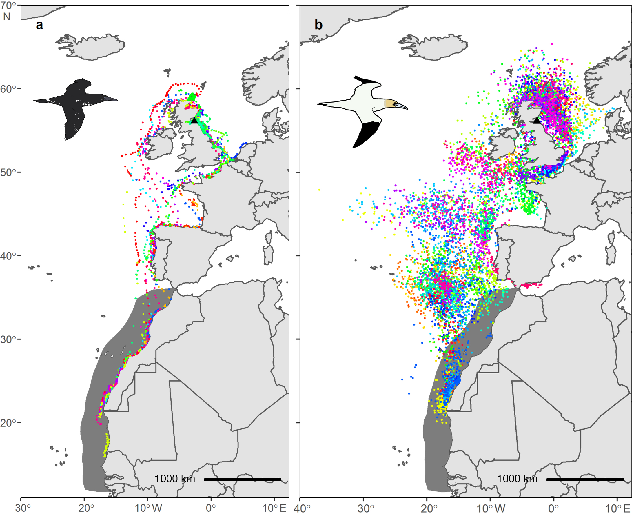 GPS locations of 41 juvenile gannets tracked and Geolocator locations of 35 adults tracked between September and November 2018 and 2019