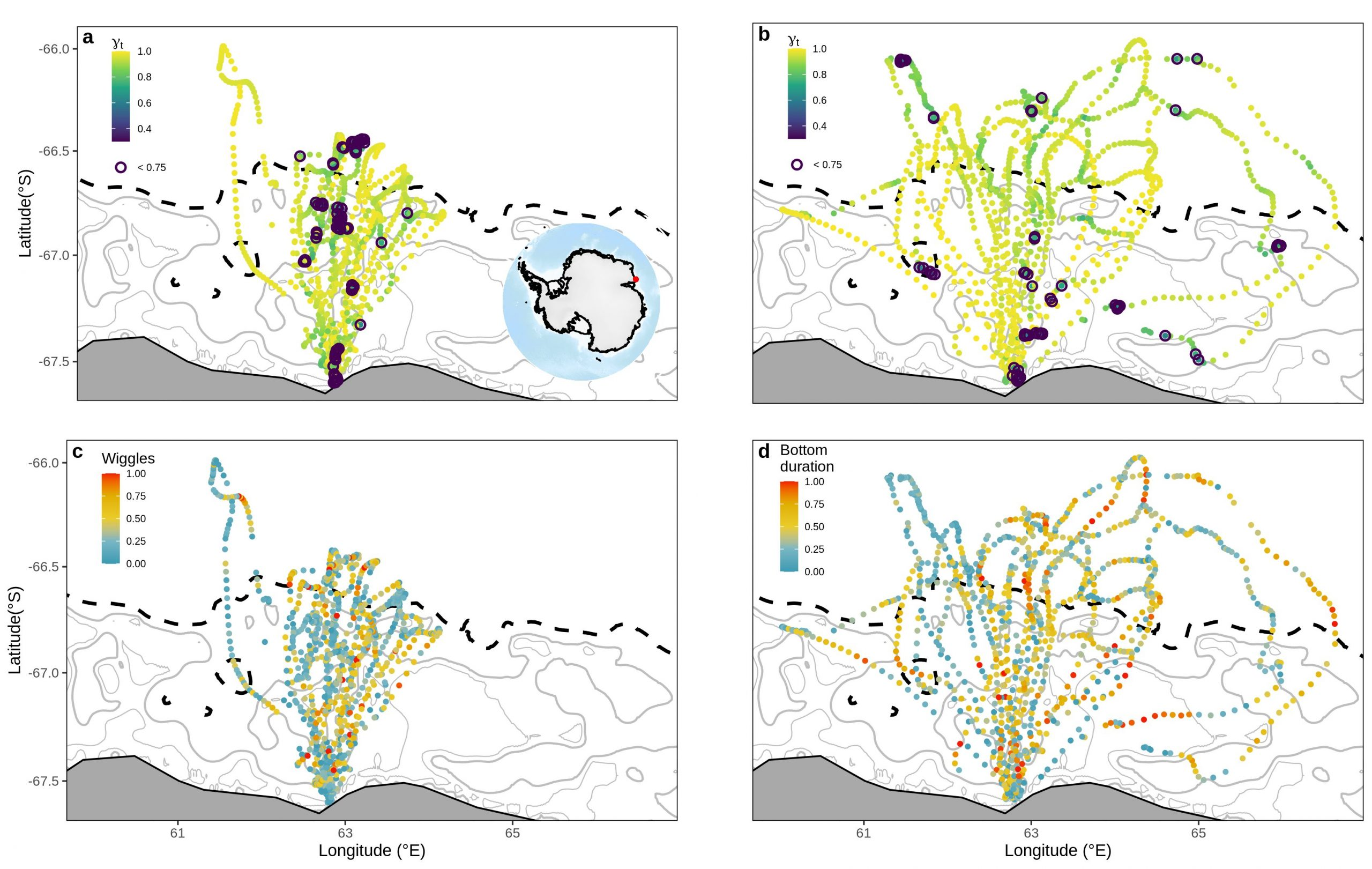 Map of State-space models filtered location estimates for chick-rearing Adélie penguins at Béchervaise Island.